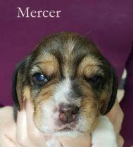 Mercer 2w