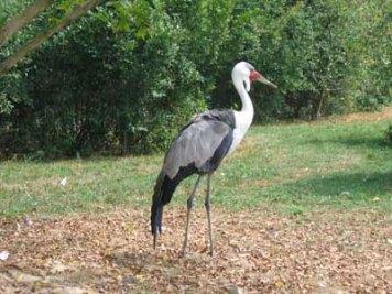 parc-des-oiseaux15