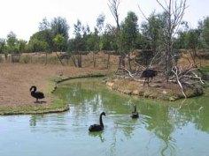 parc-des-oiseaux22