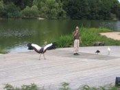 parc-des-oiseaux33