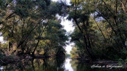 Delta Dunării canal