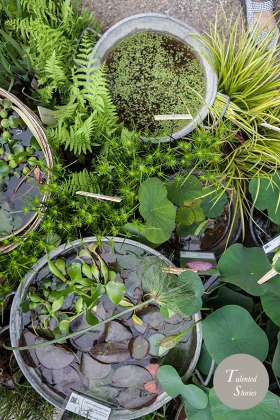 Orticola 2015 Arboreafarm @ Cristina Galliena Bohman