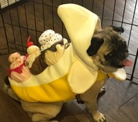 Photos From The Best Halloween Party Just For Pugs ...