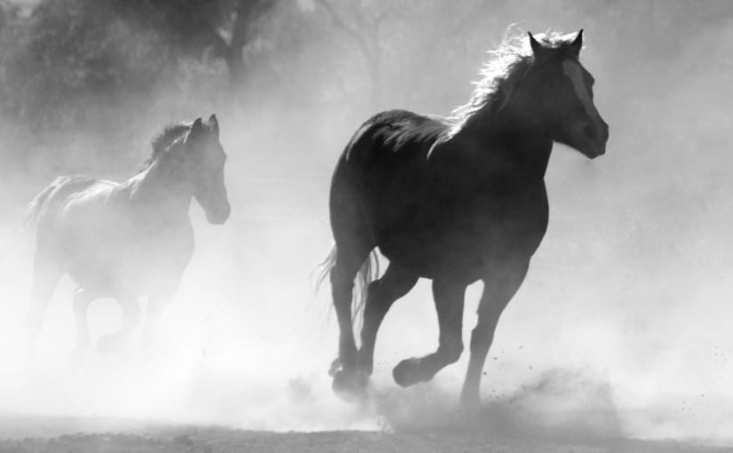 Horse Herd Fog Nature 52500retallat