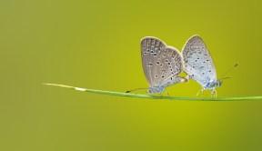 butterfly-1057768.597