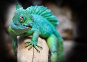 reptile-2042906_1920