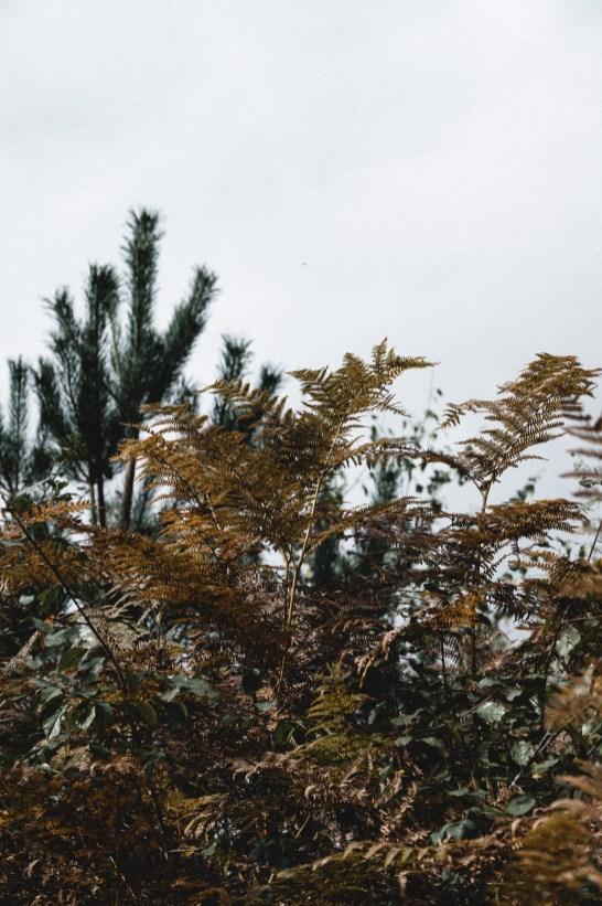 Blushing Lately - Burley in October-44