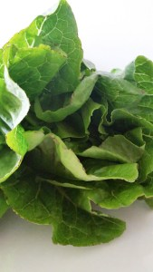 A picture of romaine lettuce