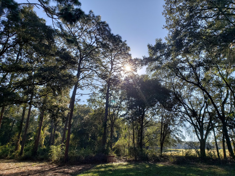 the woods at reed bingham state park