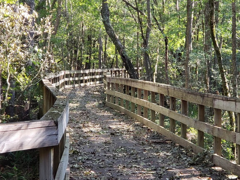 running after peoneal tendonitis, a long trail in the woods