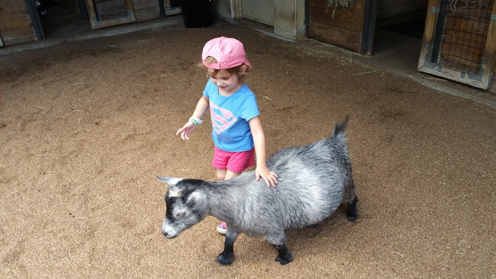 Educational outings like going to a petting zoo can help your child excel at school