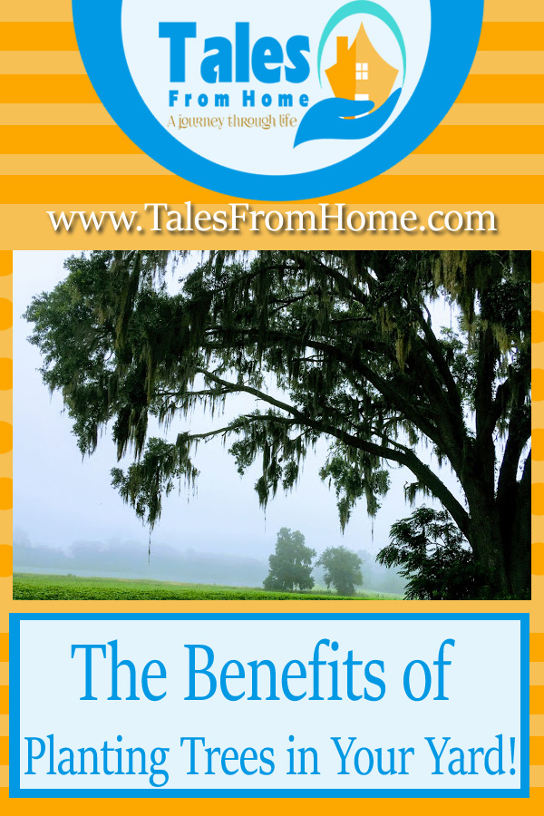 The benefits of Adding Trees to your Yard! Some are Expected, others are surprising! Check them out! #landscaping #gardening #homedecor #curbappeal #realestate #home #family #outdoorlife #outdoors