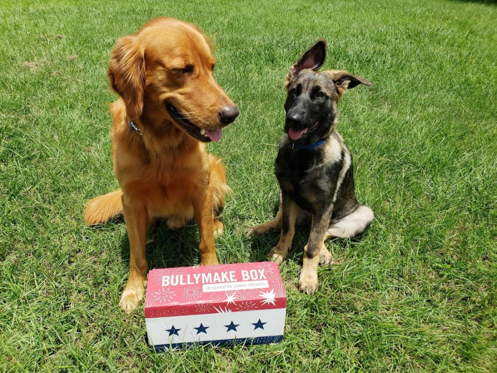 Bullymake box, A dog subscription box for power chewers