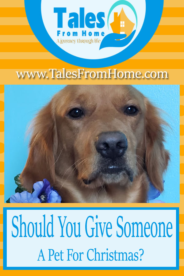 Is giving your friend or family member a pet for christmas a good idea or a bad one? #pets #family #Christmas #gifts #giftideas #dogs #cats #birds #kids #mom