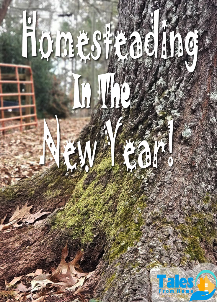 Homesteading In The New Year! How we're starting our adventure in 2021! #homesteading #homestead #Family #lifestyle