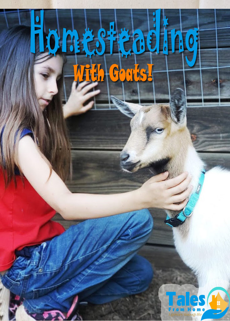 Wondering if you should add goats to your homestead? Here are the pros and cons of adding these cute and mischievous critters to your life! #goats #raisinggoats #homestead #homesteading #homesteadingtips #livestock #animals #farmanimals