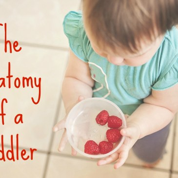 The Anatomy of a Toddler