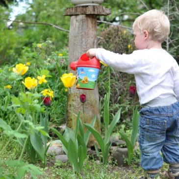 Top tips for creating a family Spring garden