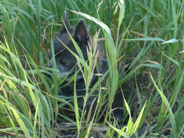 Hiding in the grass