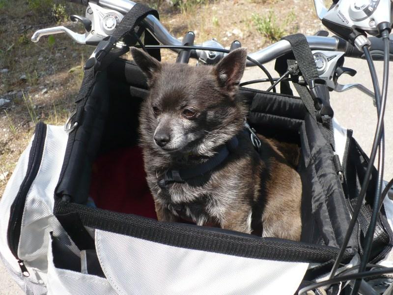 Solvit bike basket for dogs