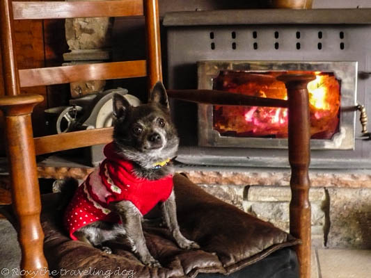 Roxy by the fire Wordless Wednesday