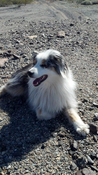 Roxy the traveling dog
