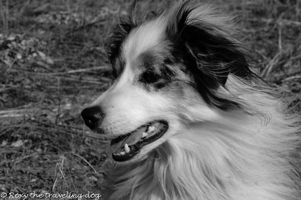 Black and White Sunday,Torrey,dog