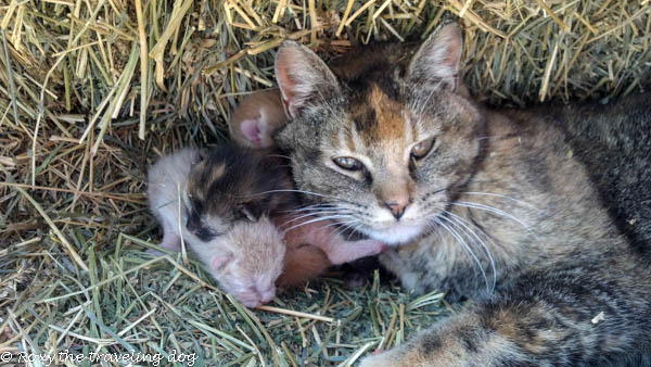 fresh kittens