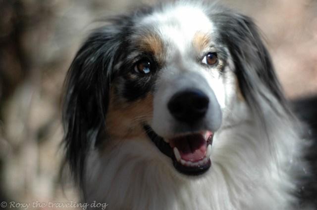 skeptical dog, Torrey