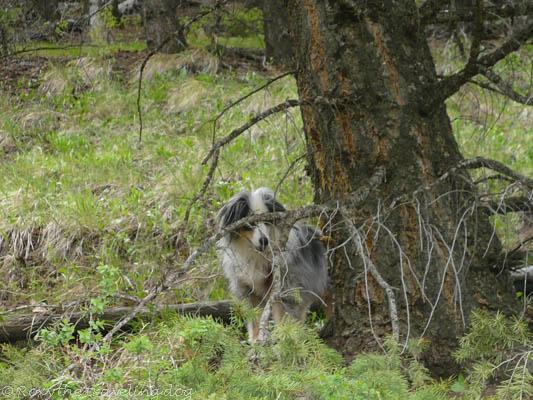 FitDog Friday, hiking in Jackson hole