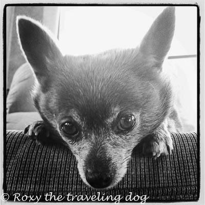 Roxy and those fabulous eyes