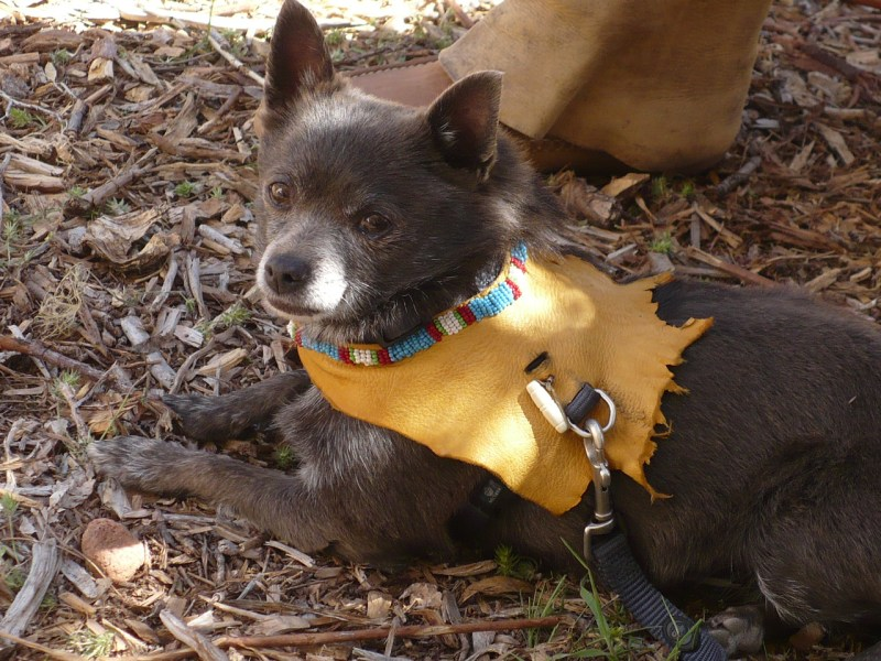 Beaded buckskins for dogs