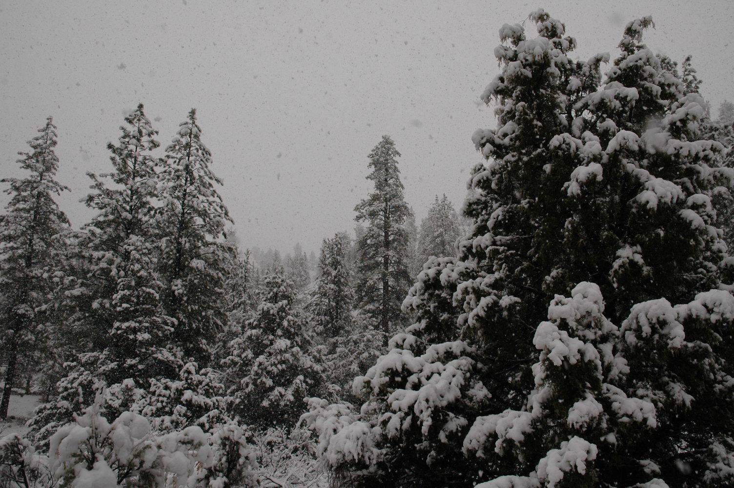 Huge snowflakes