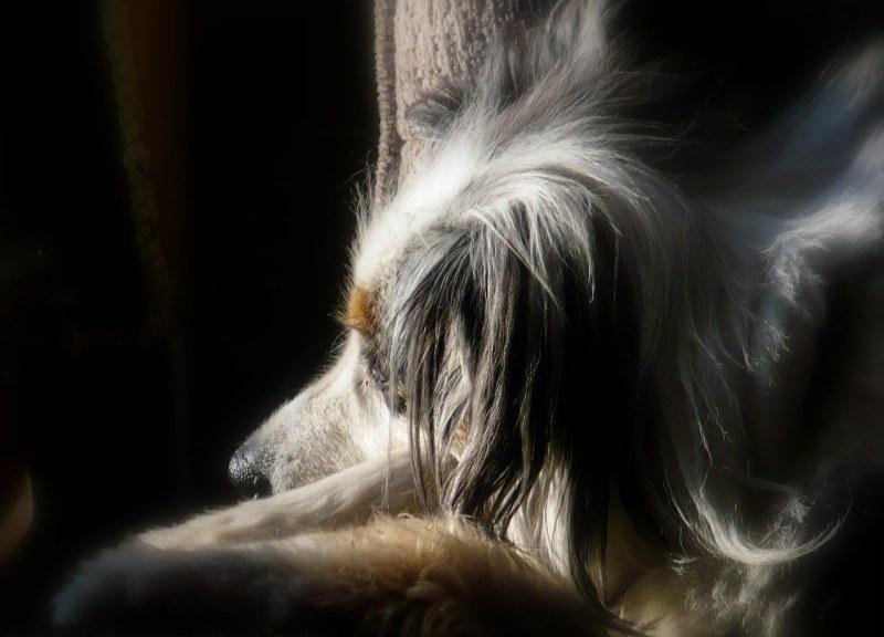 Torrey-Our sacred spirit dog