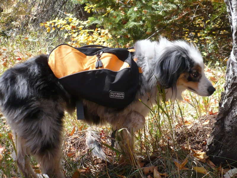 outward hound dog back pack