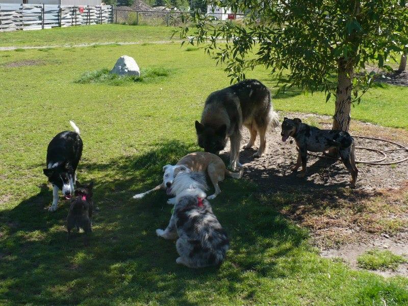 Dog park in Jackson Hole