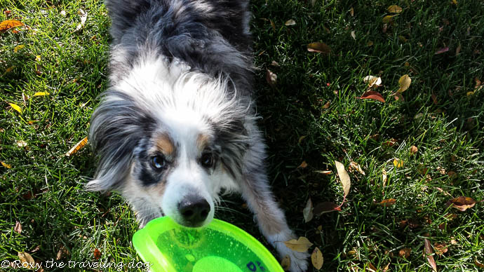 Dogobie dog disk review