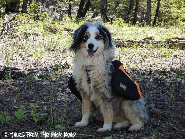 Torrey and her Kyjen backpack