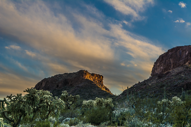 Sunset in Organ Pipe monument