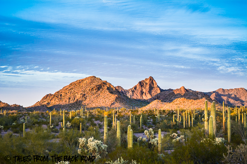 Sonoran desert at sunset