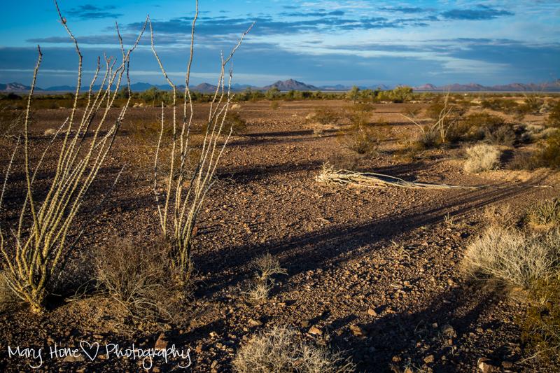 Shadowed cactus