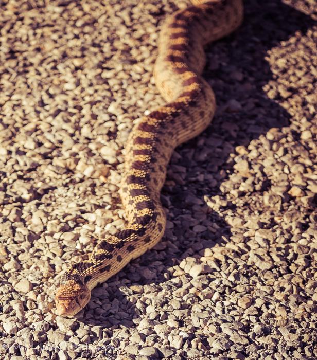 Where to go, snake