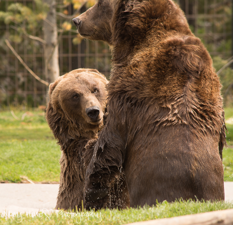 http://www.grizzlydiscoveryctr.com/