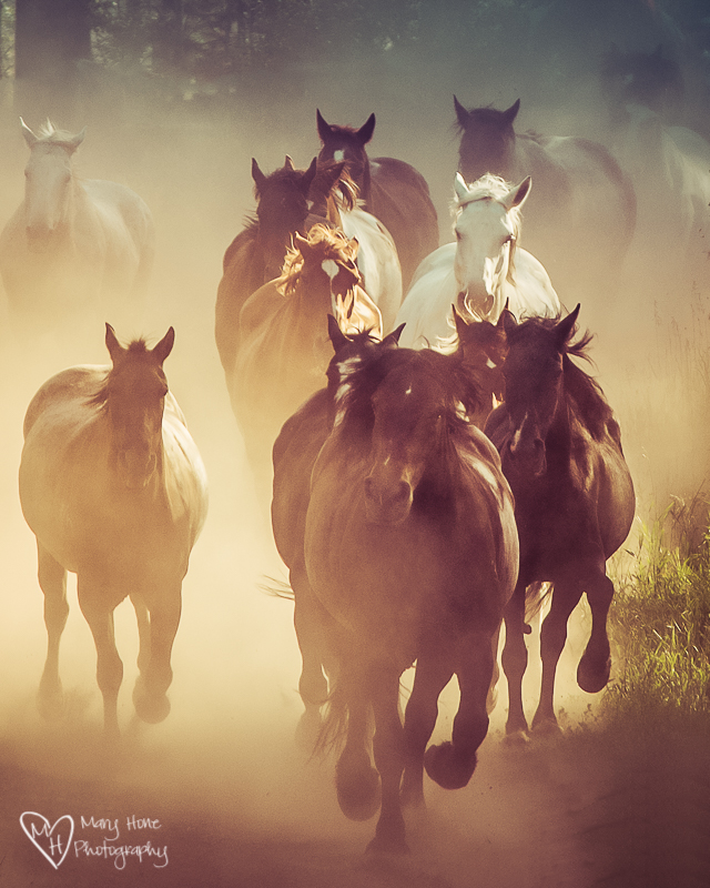 A gathering of horses