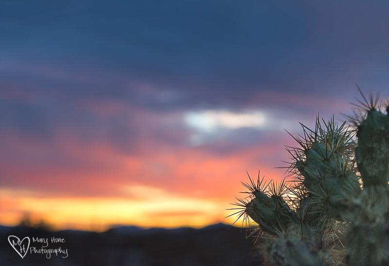 Cactus at sunset in Quartzsite