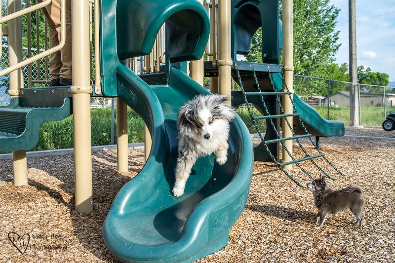 Dog going down the slide