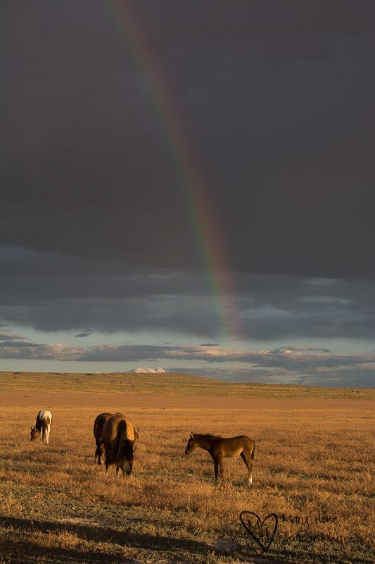 Rainbow and wild horses