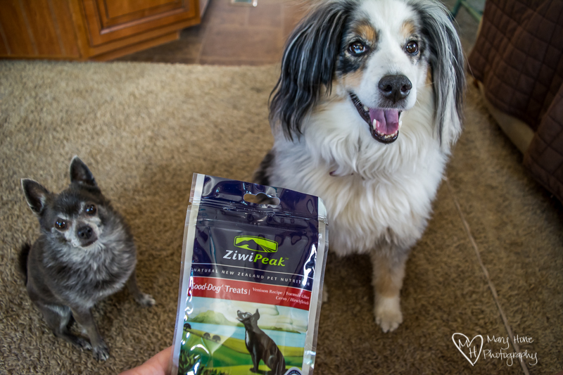 Ziwi Peak Dog Treat Review