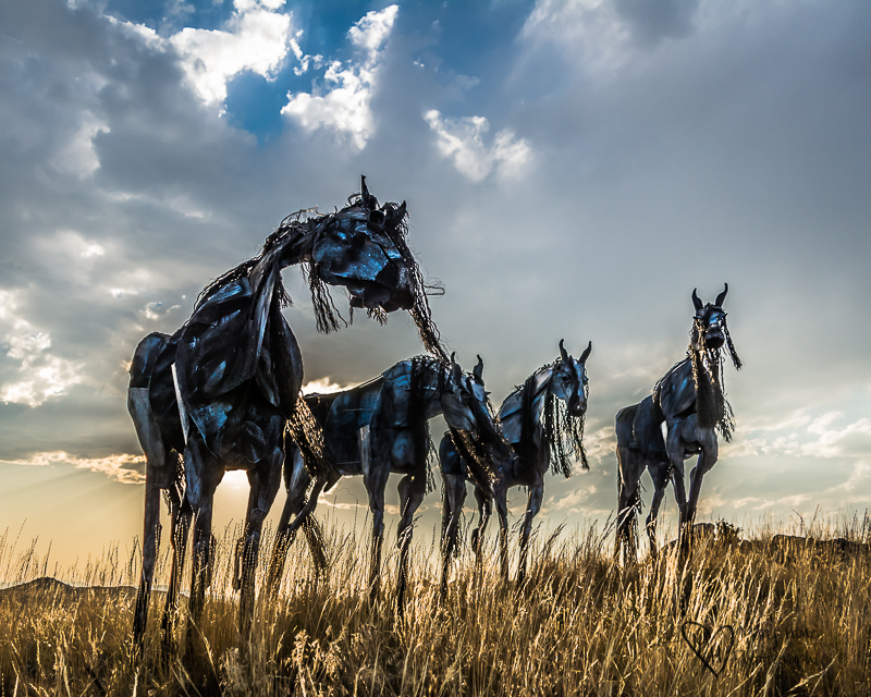 Bleu Horses of Three Forks Montana