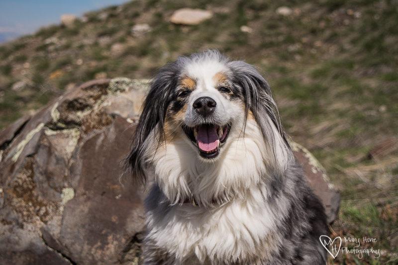 smiling dog having fun